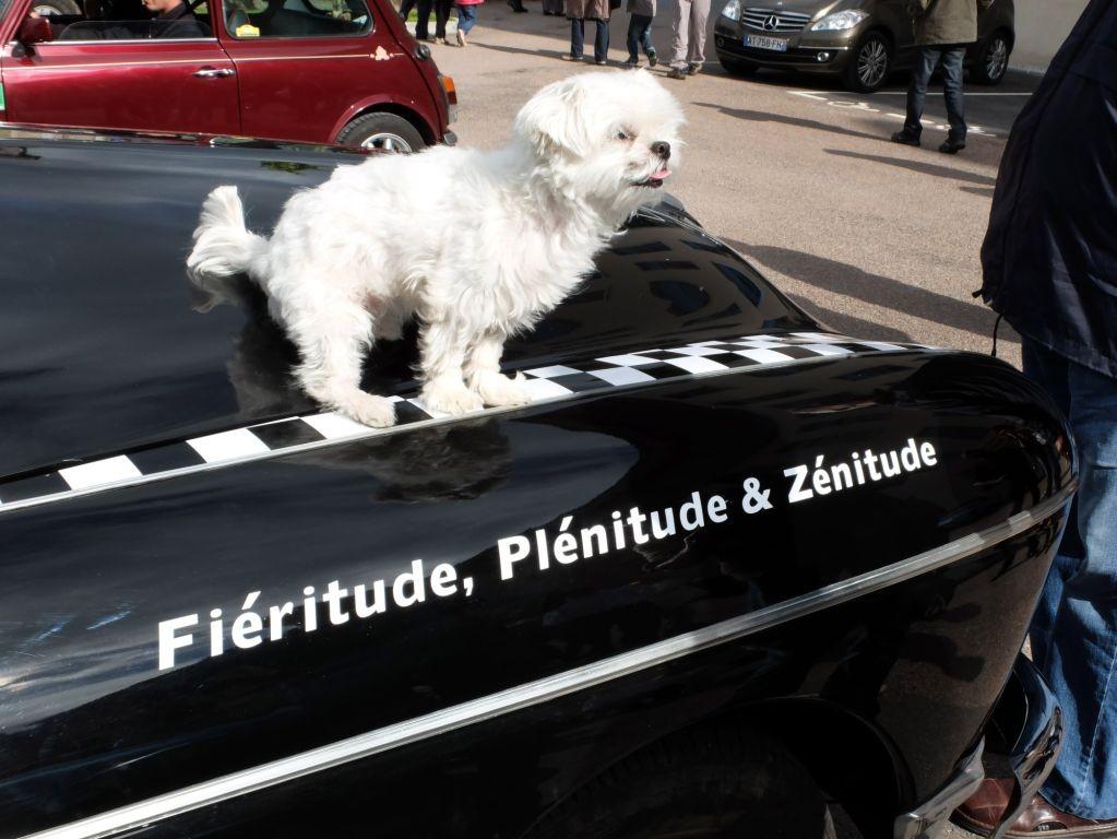 La Renault Frégate d'Érik Comas et Isabelle de Sadeleer avait du chien !