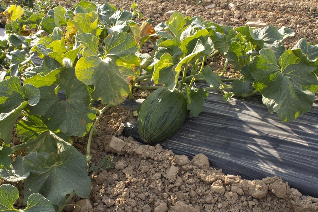 melons ecoturis&Lapebrella