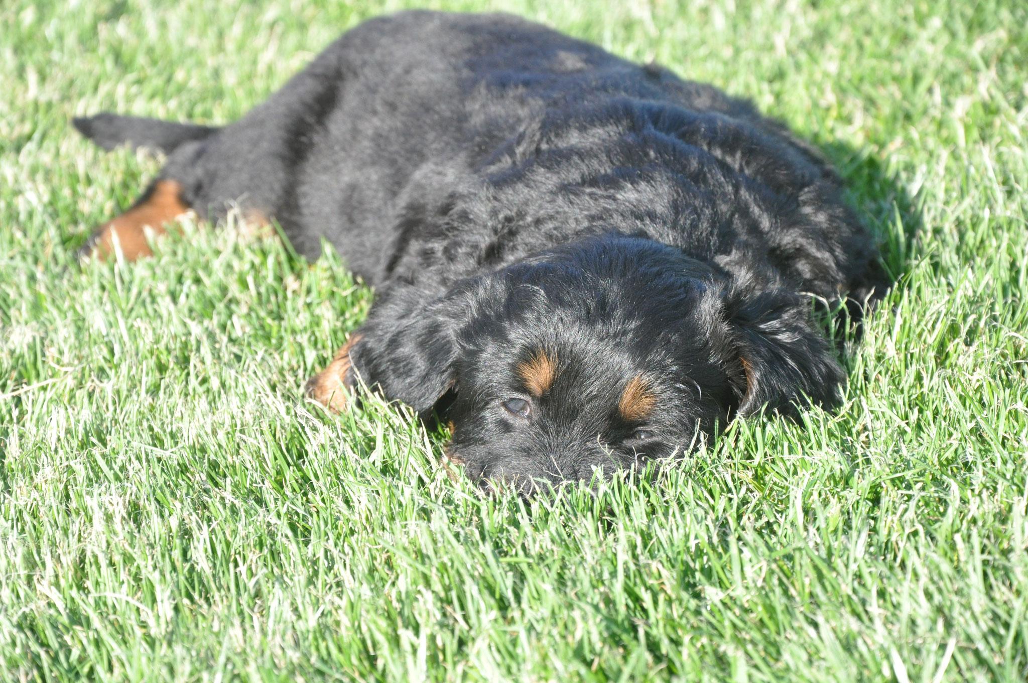 Der Versuch, sich im Gras zu verstecken...