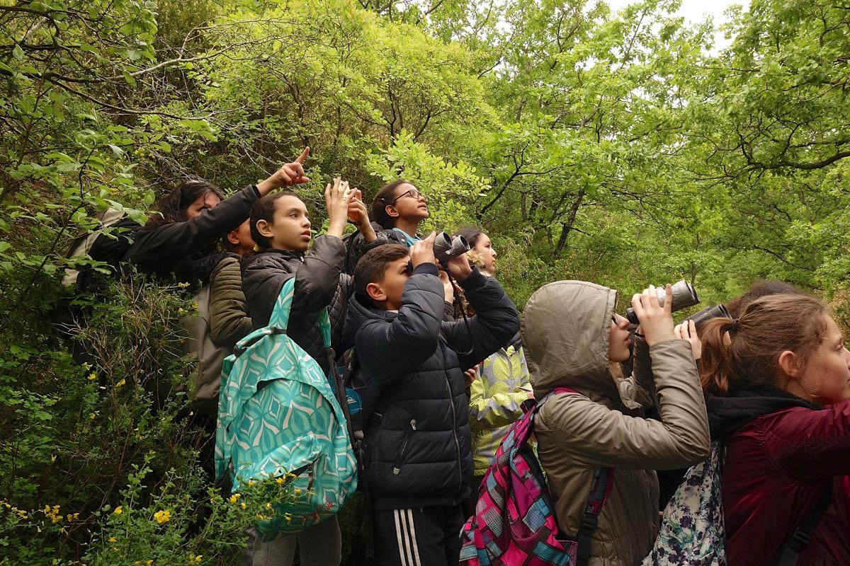 S'émerveiller Découverte de la forêt de Saoû