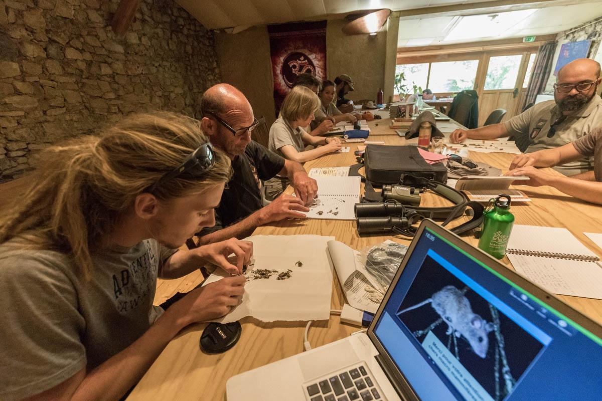 """Atelier """"pelotes de réjection et inventaire des micro-mammifères """""""