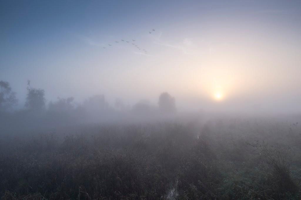 Sonnenaufgang im Linumer Teichland . Langsam tauchen die Kraniche aus dem Nebel auf...  ©  martinsieringphotography