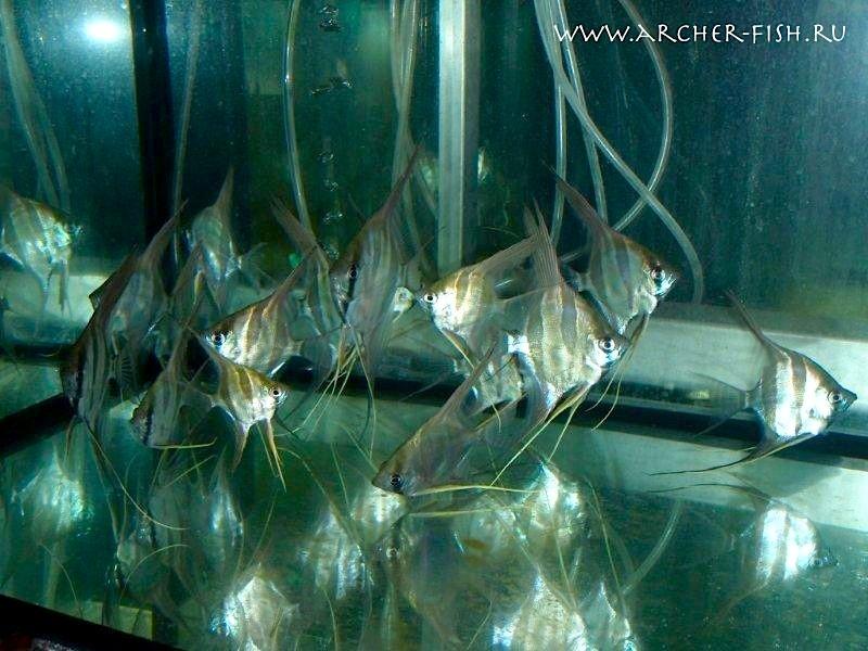 Aquarium Glaser, январь Image