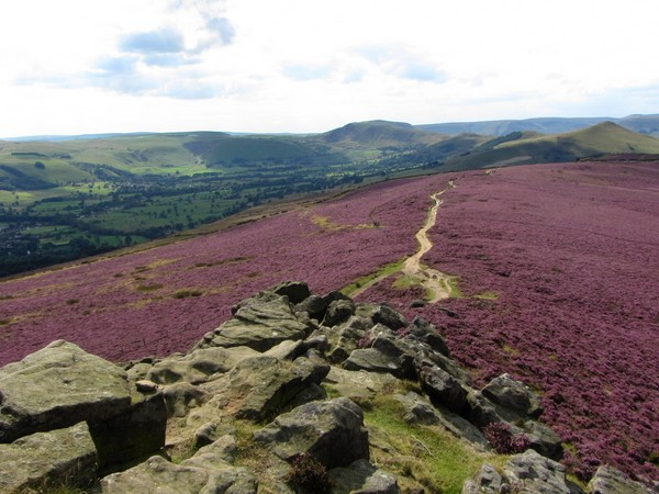Win Hill with the heather in bloom