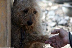 Hundehilfe Polen