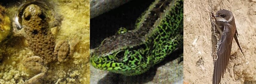 In einer Kiesgrube entsteht ein einzigartiges Biotop für gefährdete Tiere und Pflanzen.