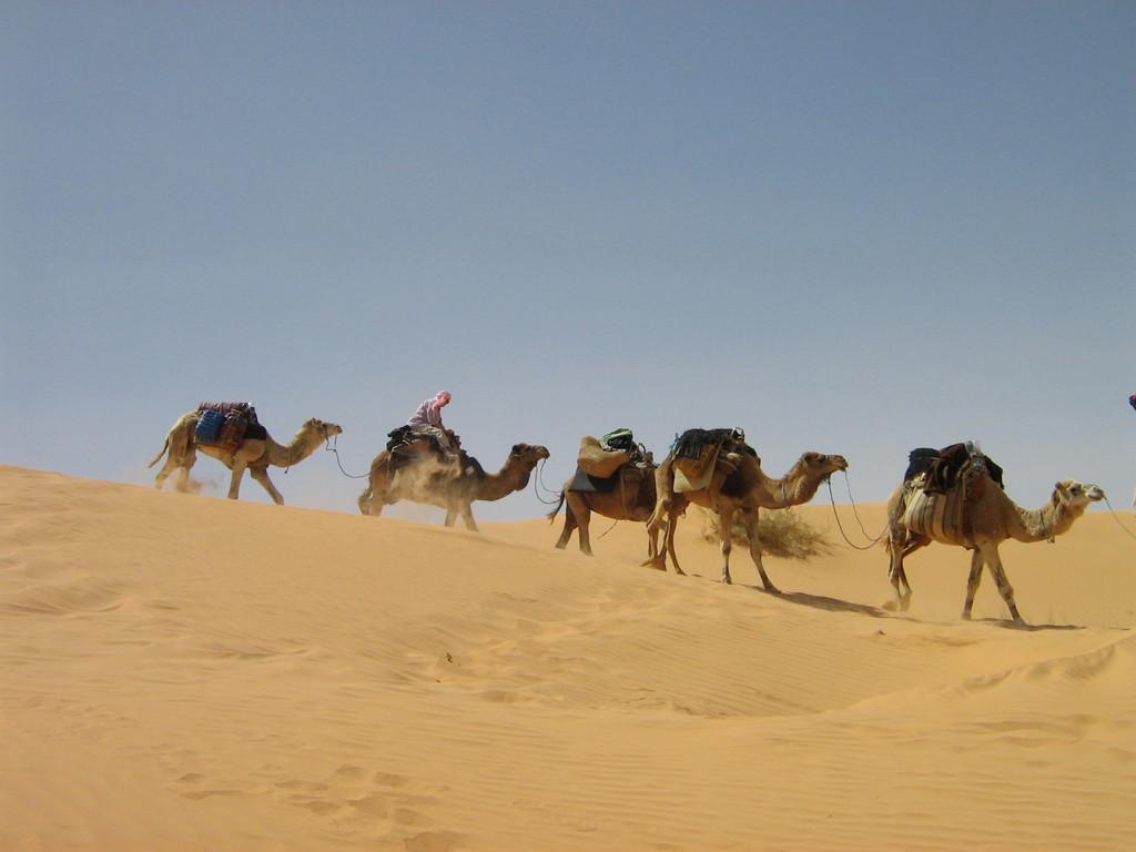 Ritt durch die Wüste