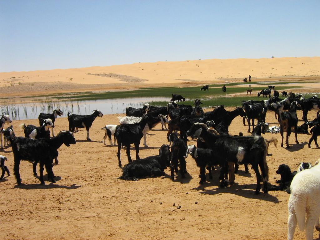 Nomaden mit ihren Tieren am See