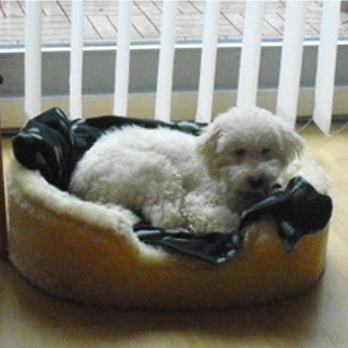 Wilson wohnt bei einer Fam. mit einen weiteren Hund in einem Haus mit Garten