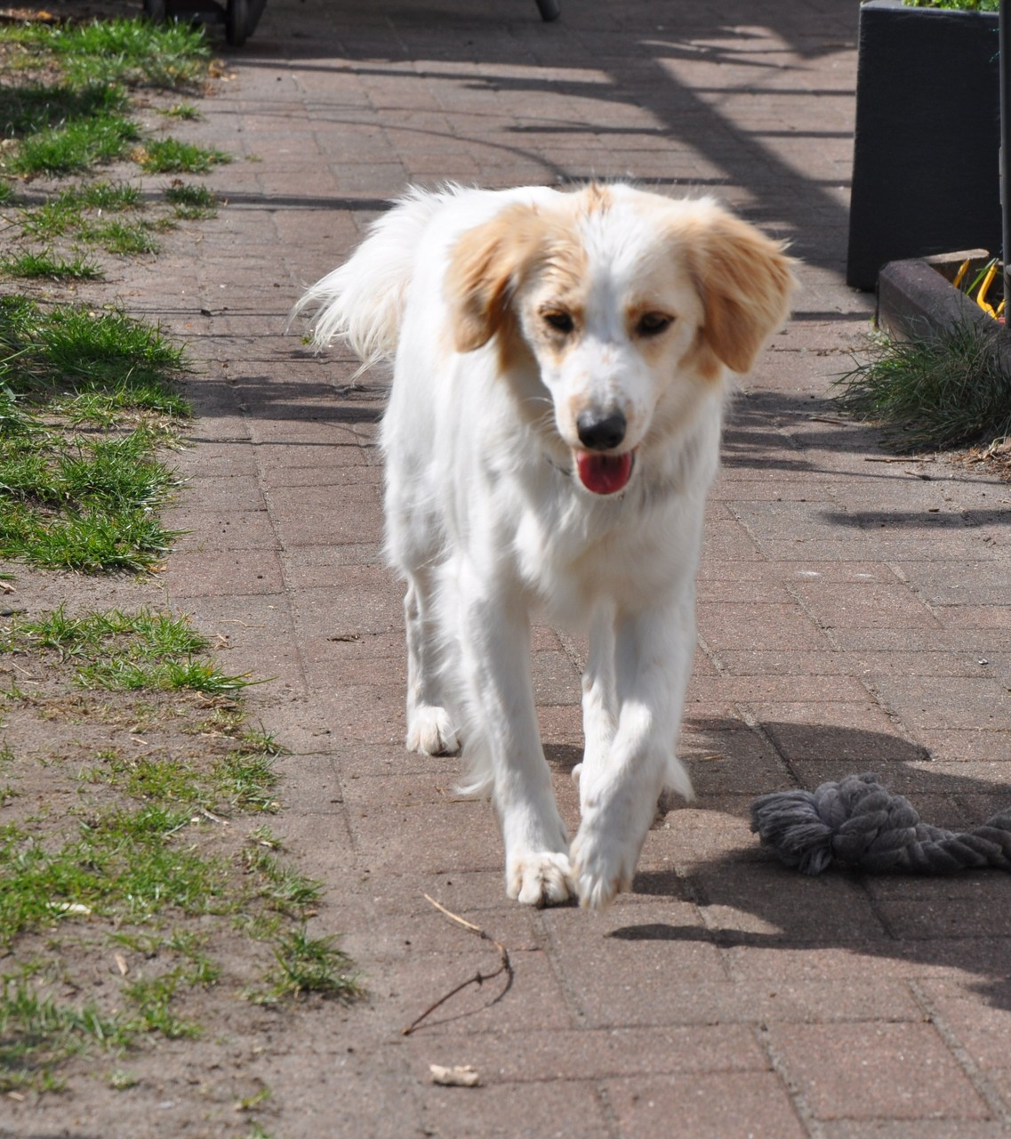 Quilla wohnt mit 2 Kindern und einen weiteren Hund in einem Haus mit Garten bei Bremen
