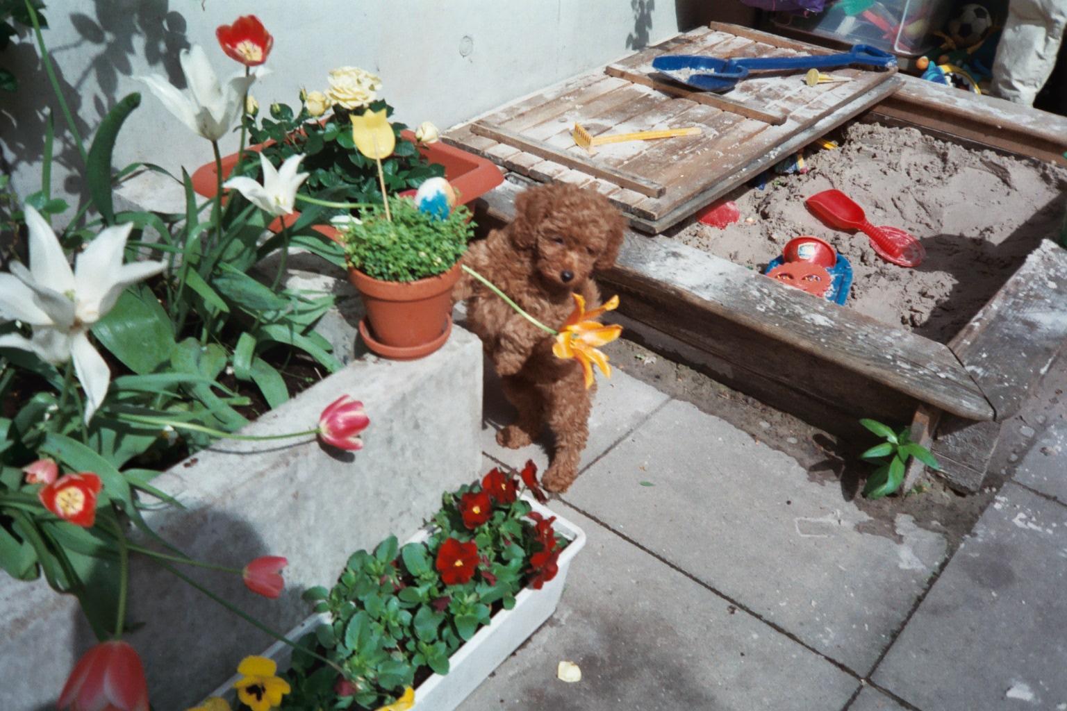 Am 30.04.2003 war es endlich so weit. Gina war 8 Wochen alt und durfte bei uns einziehen.