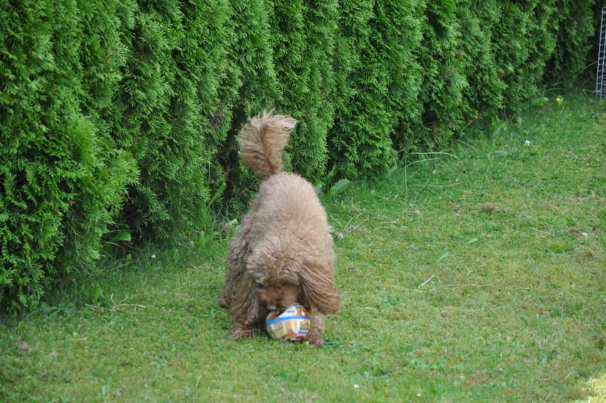 Auch Ball hat sie gern gespielt.
