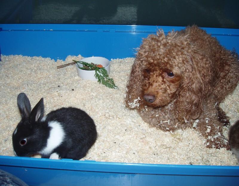 Sie mochte Kaninchen!