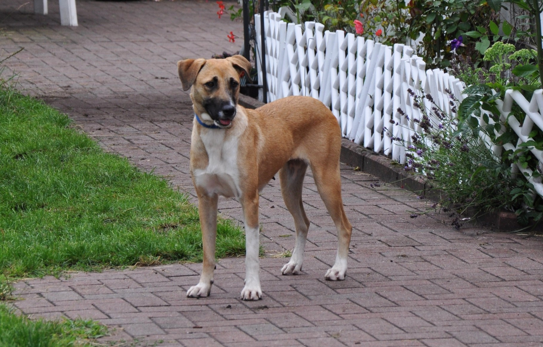 Soraja wohnt mit 2 weiteren Hunden und 3 Kindern in einem Haus mit Garten bei Flensburg