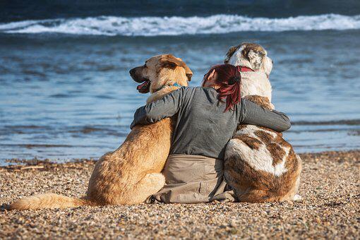 Laid Back Dogs Company レイドバックドッグスカンパニー 犬の行動