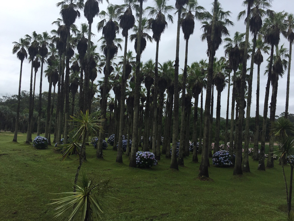 einfach eine Augenweide: Bäume und Pflanzen