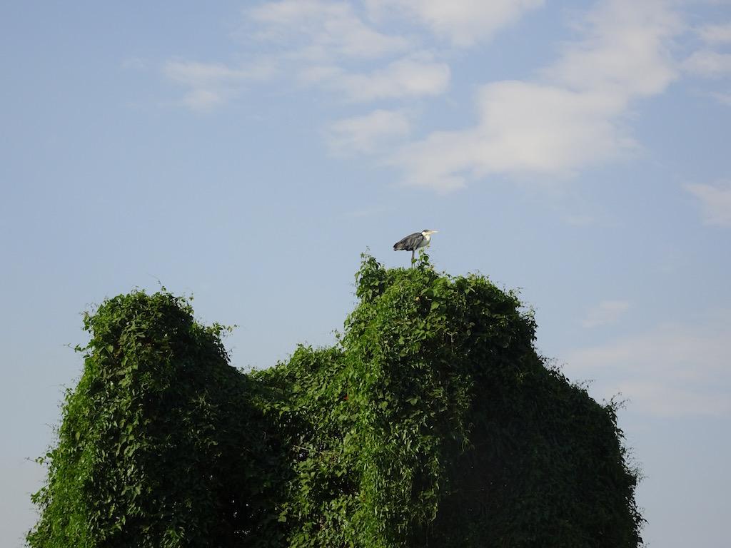 zuoberst auf den Wipfeln halten die Vögel Ausschau.....