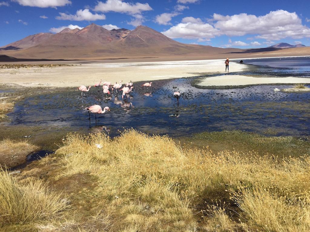 An den einzelnen Lagunen treffen wir verschiedene Arten von Flamingos!