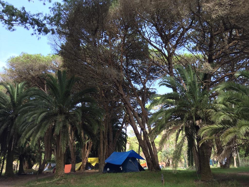 oder in idyllischen Palmenhainen