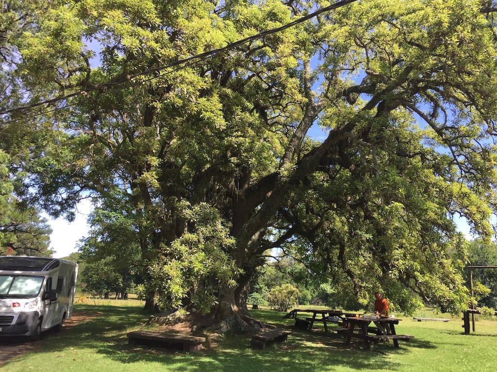 gemütliches Frühstück unter einem Ombubaum
