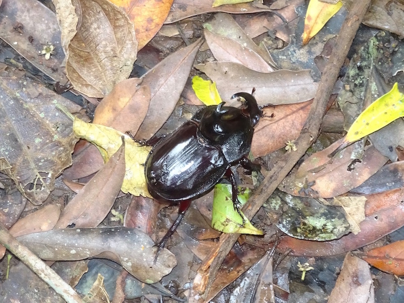 Der Käfer eilt über den Weg...