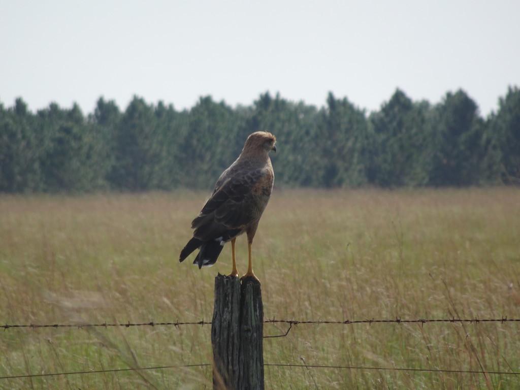 ein Vogel schaut uns friedlich nach....