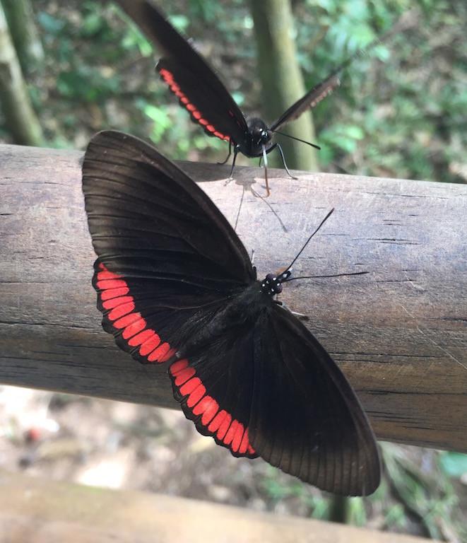 Überall begrüssen uns wunderschöne Schmetterlinge... -