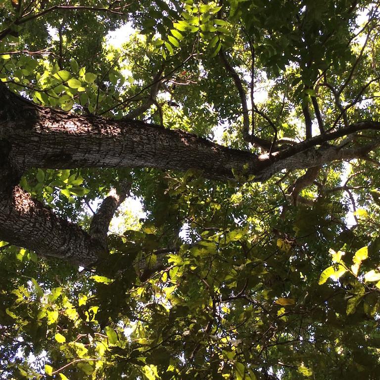 und der Tukan hoch oben im Baum....