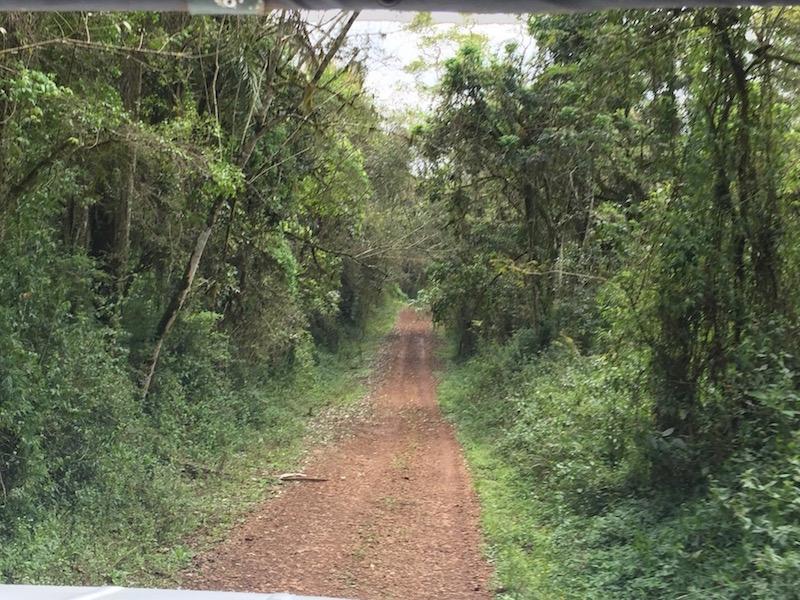 Faszinierend der Urwald!