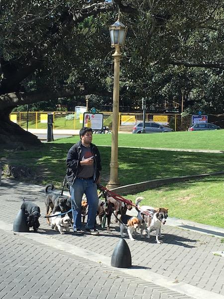 8-12 Hunde führt ER oder Sie Gassi und verdient sich einen Zuschuss!