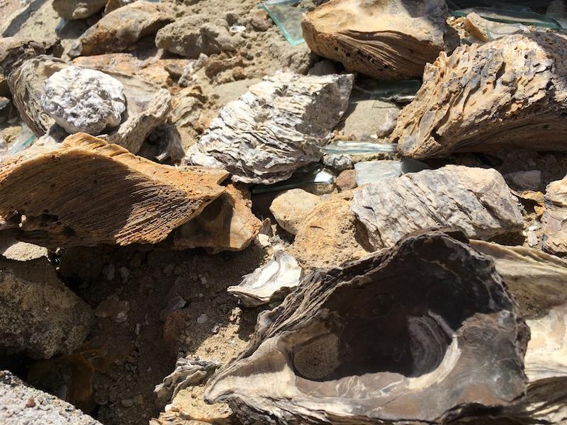 Versteinerte Muscheln ..... leider ist das Vitrinenglas eingeschlagen