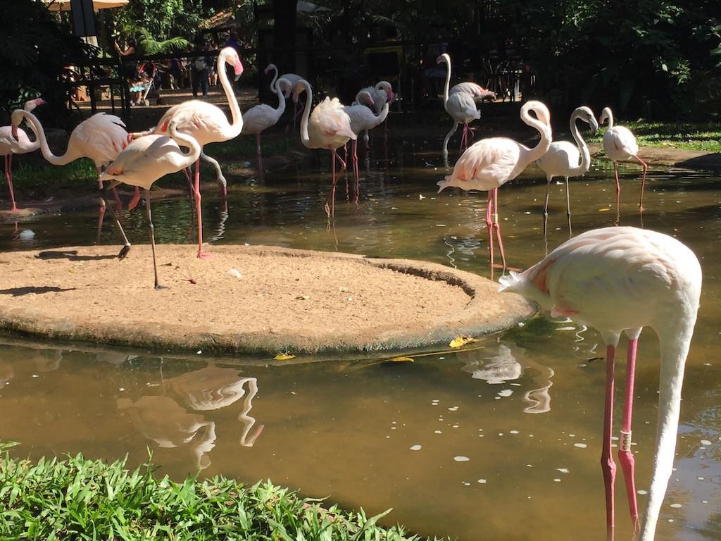wo zwei Arten Flamingos friedlich miteinander leben,