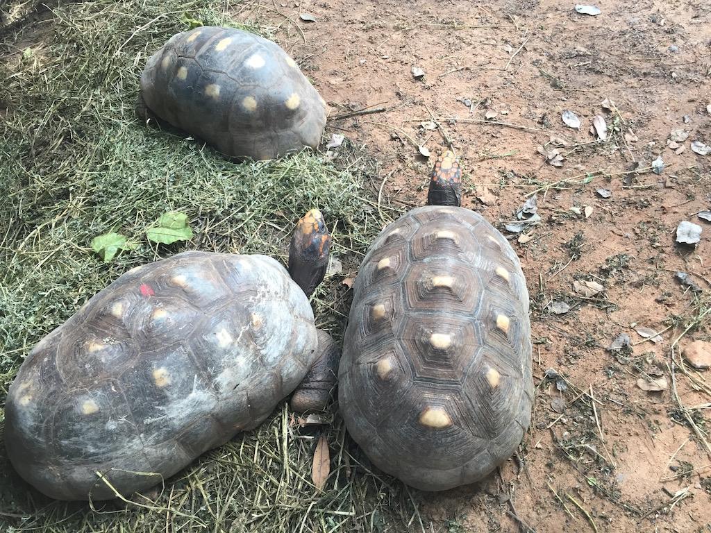 Und was besprechen diese Schildkröten?