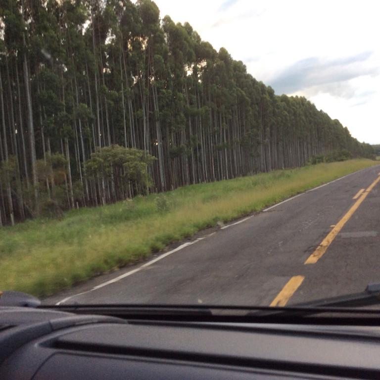 Eukalyptuswälder, Holzverarbeitung zu Briketts