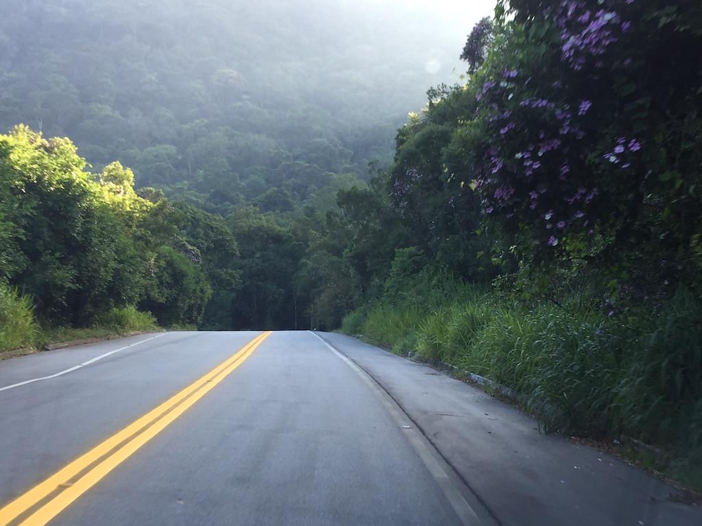 wieder durch den Regenwald