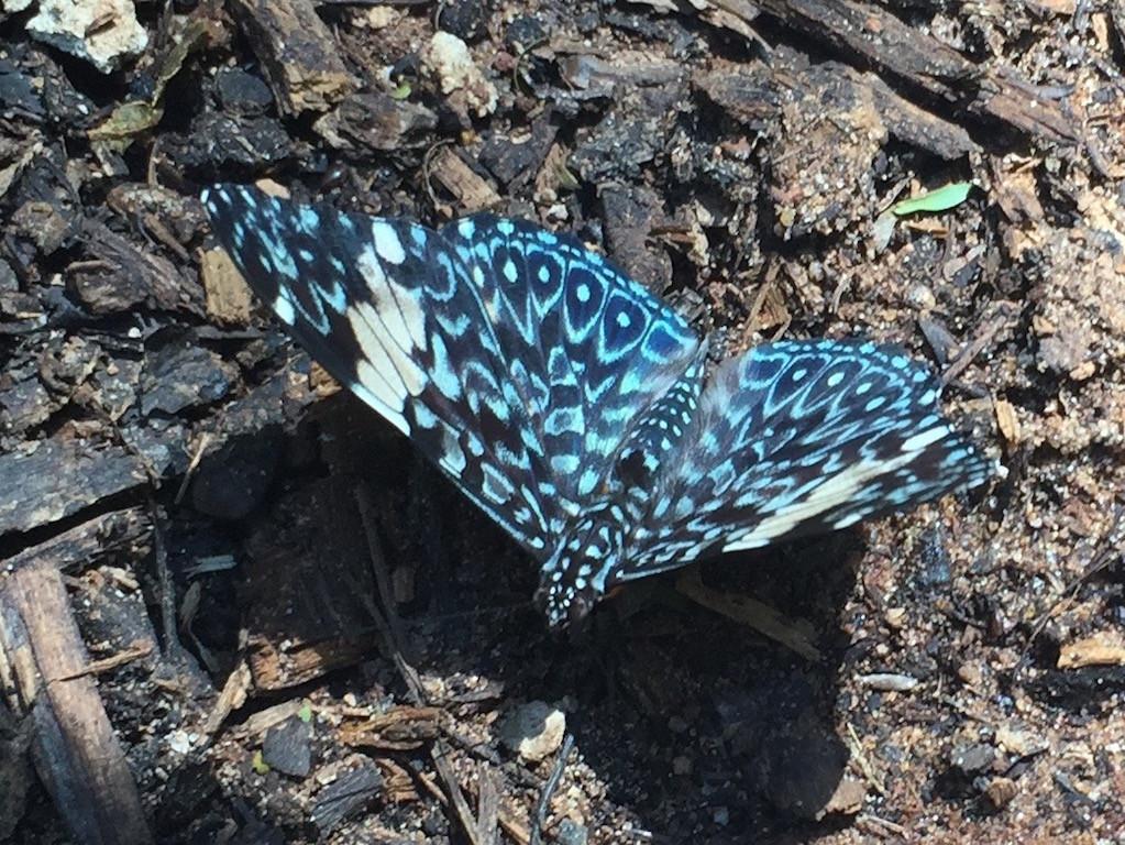 und der schön gezeichnete Schmetterling vor uns hertanzt!