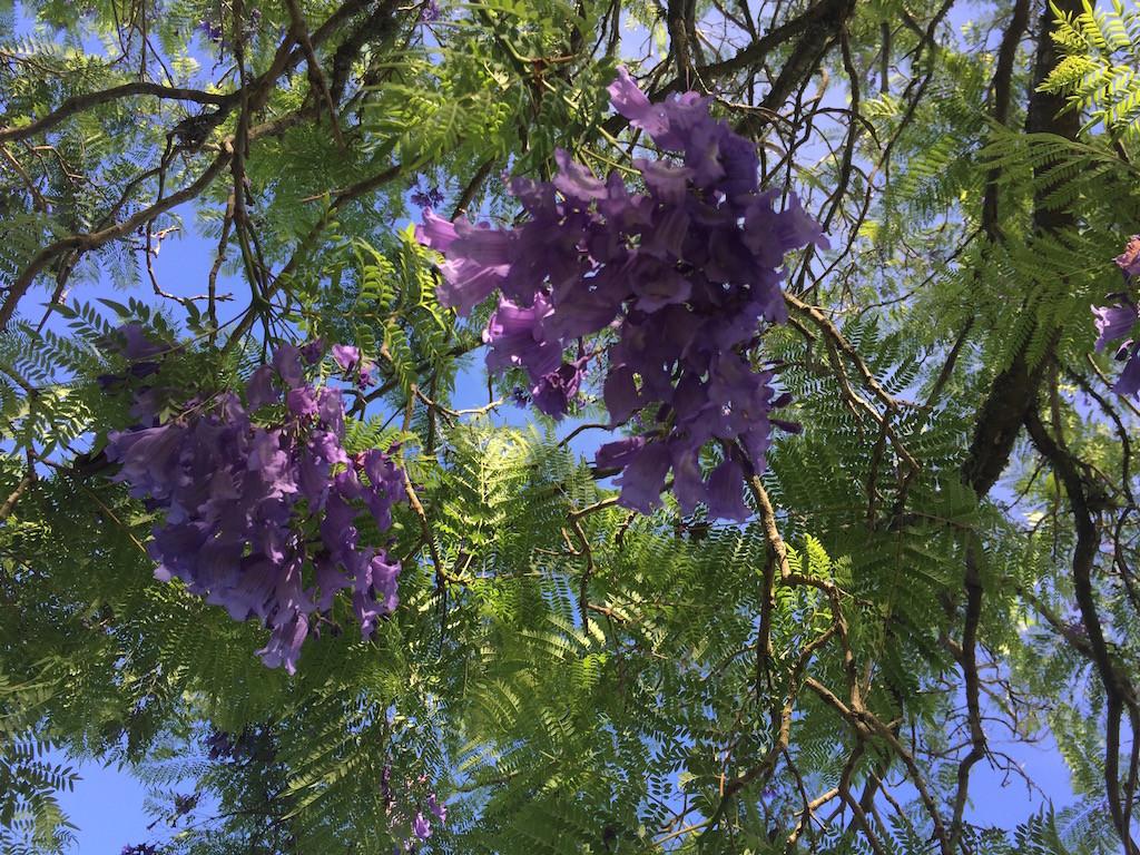und farbige Weihnachtsgeschenke aus der Natur, violette Blüten
