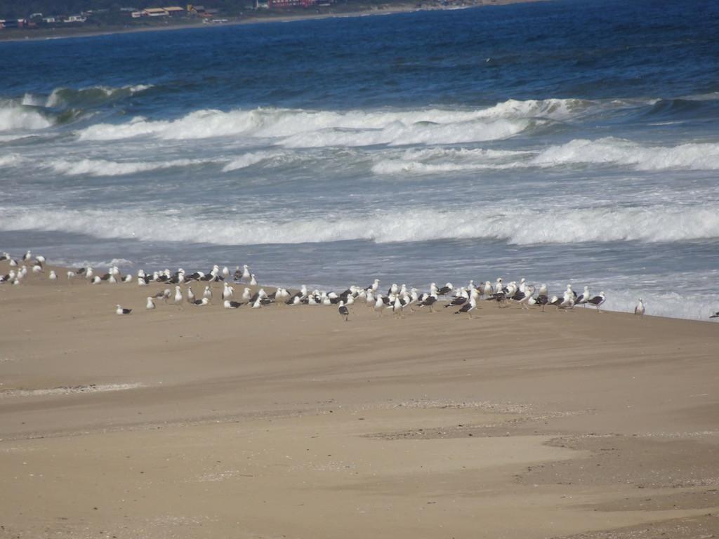 Strand-Silvesterparty der Möwen....