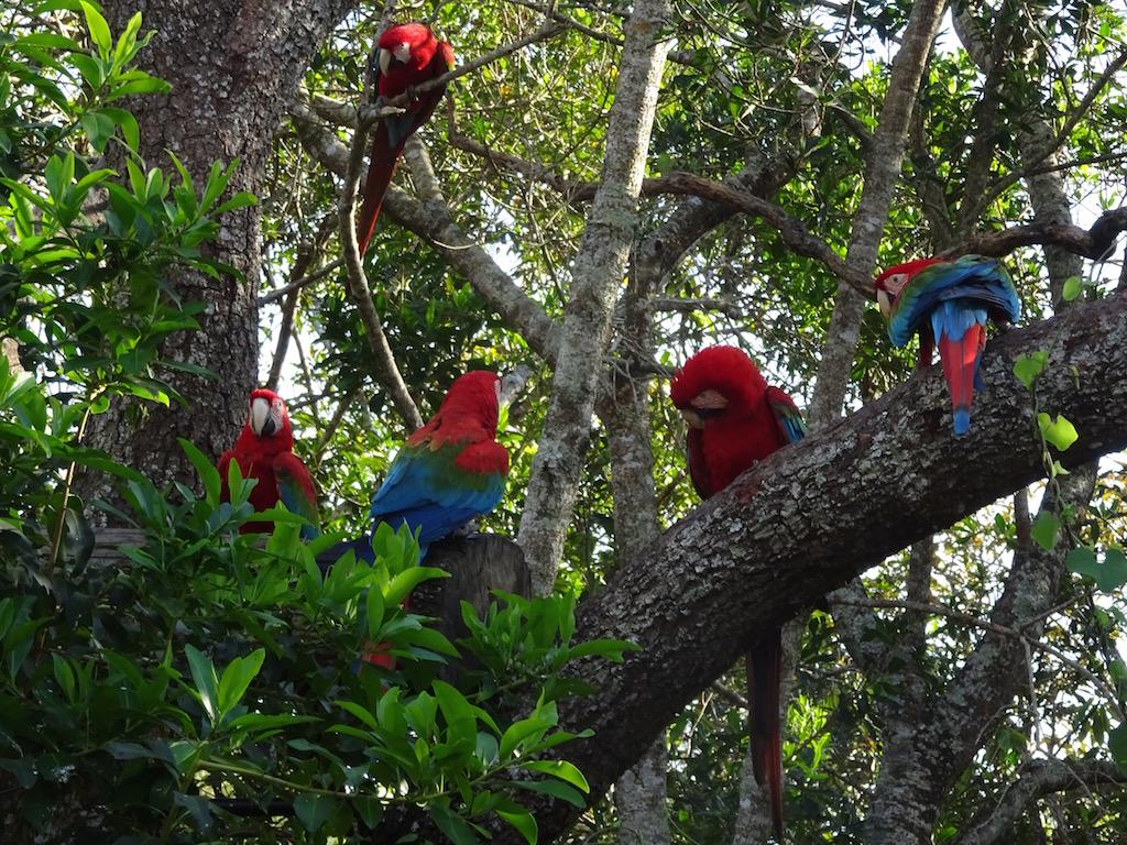 Parque Buraca das Araras: Stelldichein und das Gezwitscher geht los!