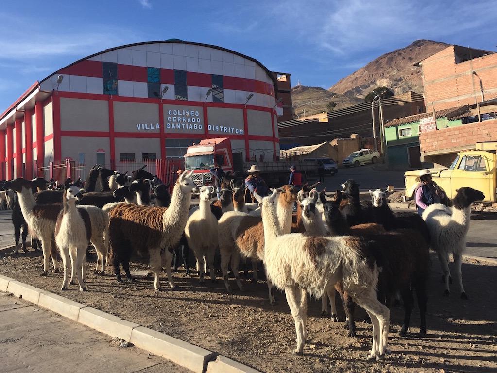 Lamamarkt bei der Durchfahrt in Potosí!