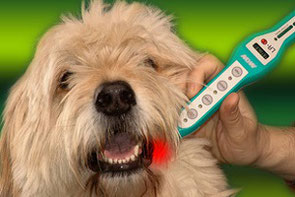 Lasertherapie beim Hund, Pferd und Katze