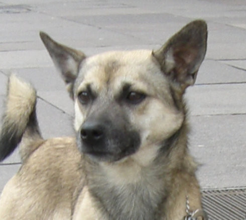 Südtirol  -  Mischlingshund findet neues Zuhause