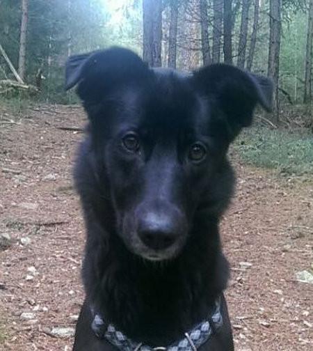 Südtirol  -  Hunde-Mischlings-Mädchen findet neues Zuhause