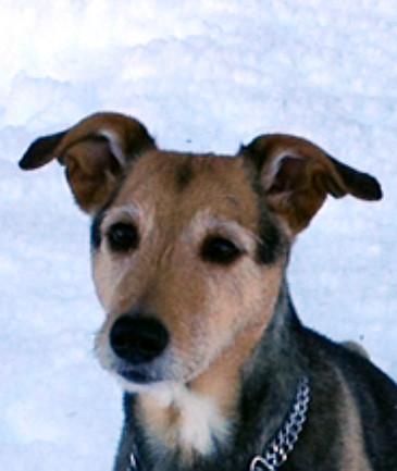 Südtirol  -  Hunde-Seniorin findet neues Zuhause