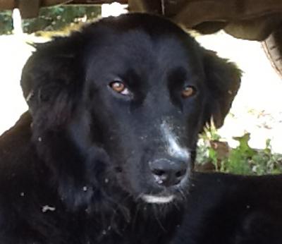 Südtirol  -  junger Mischlingshund findet neues Zuhause