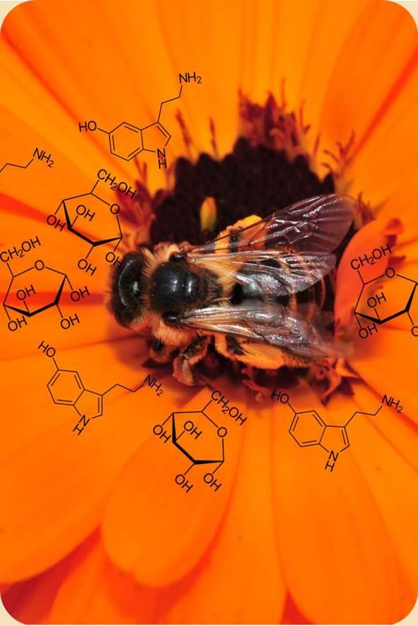 Tiere & Pflanzen sind lebendige Chemie-Fabriken.