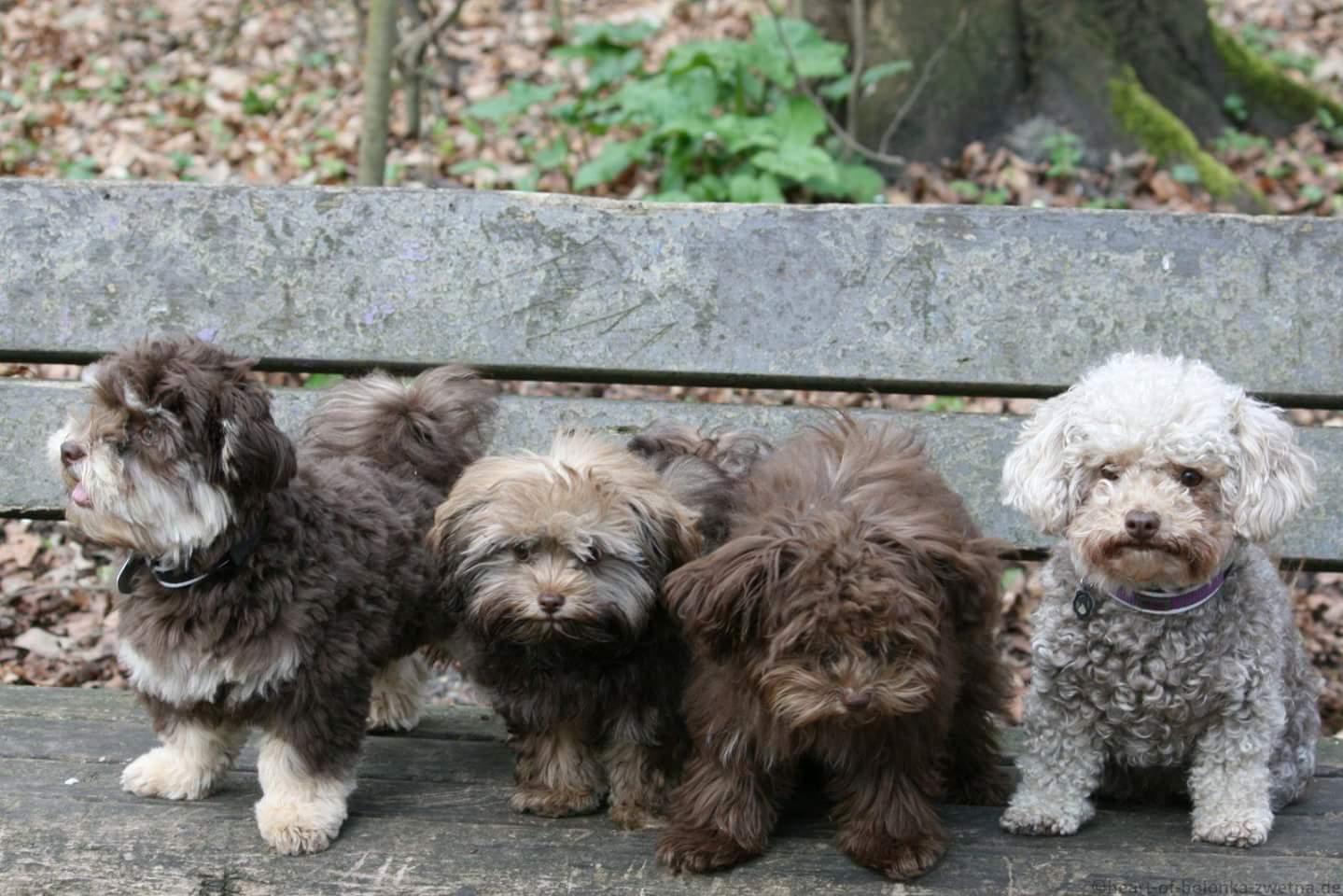 Armani, Aidan, Arwen (Amy), Baileys