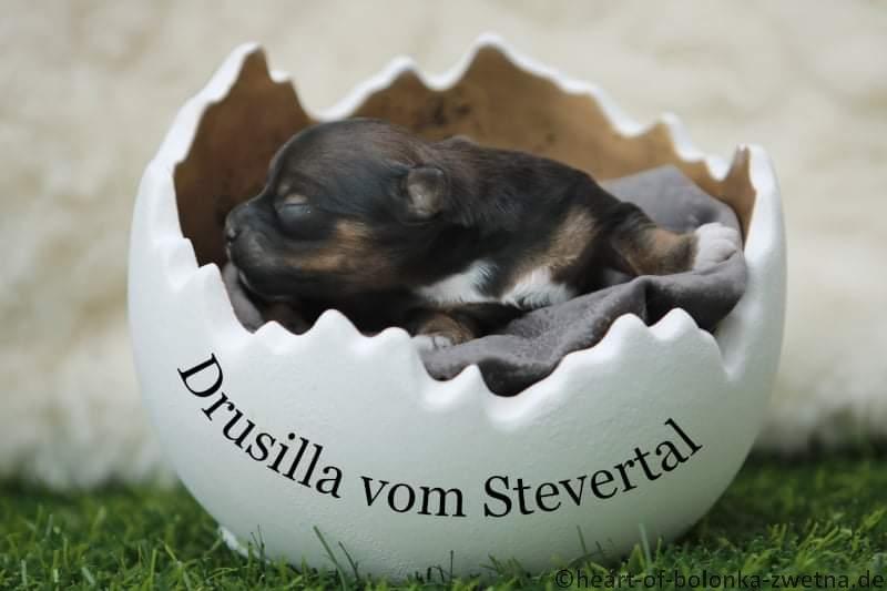 Drusilla vom Stevertal