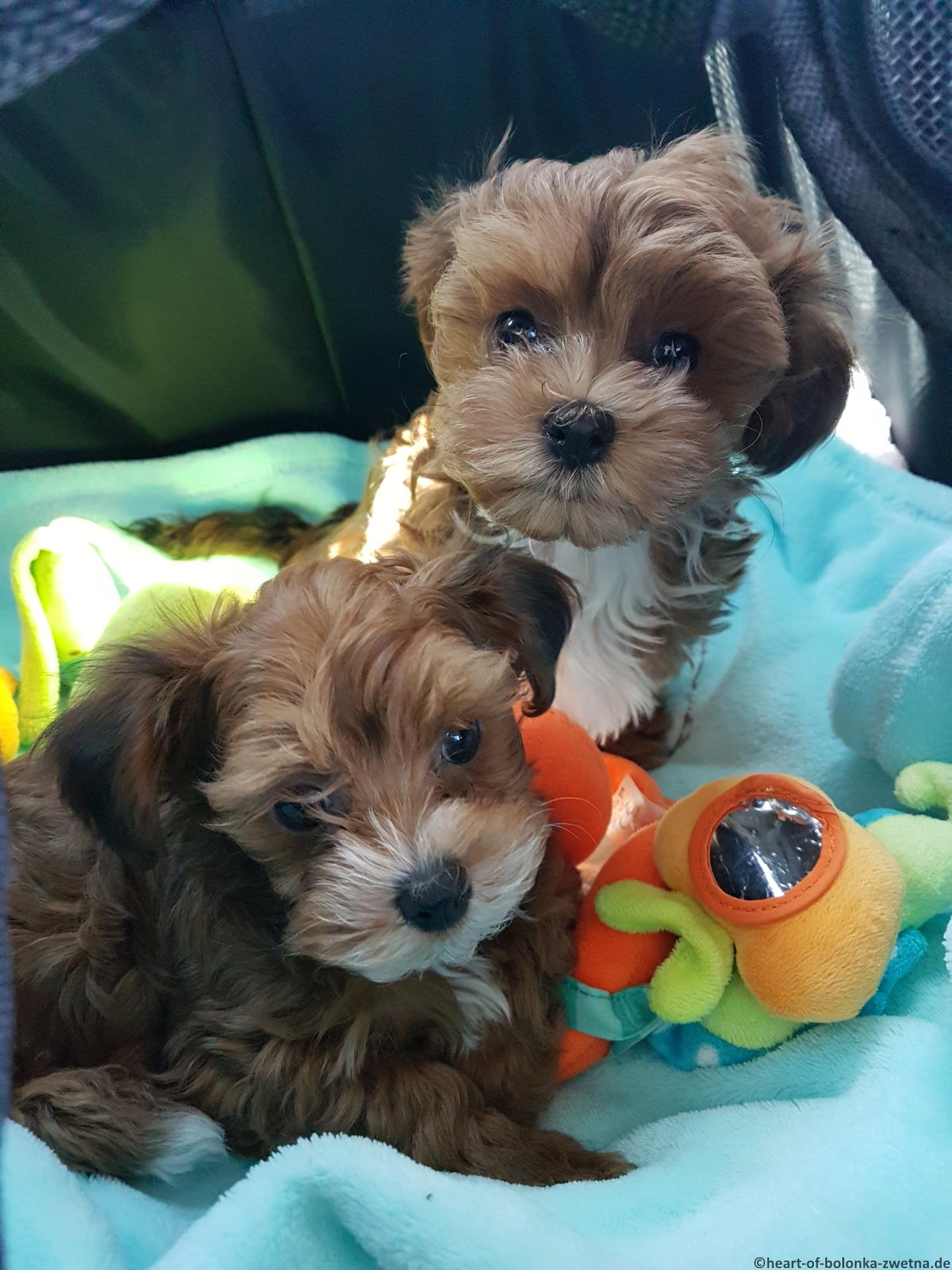 Bambam und Greta im Mai auf dem Weg in ihr neues Zuhause
