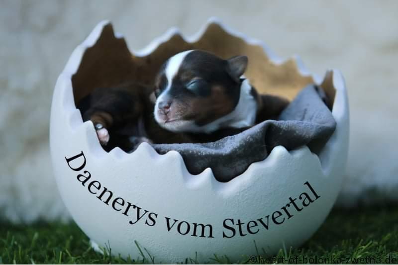 Daenerys vom Stevertal